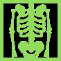 skeleton-view-on-x-ray